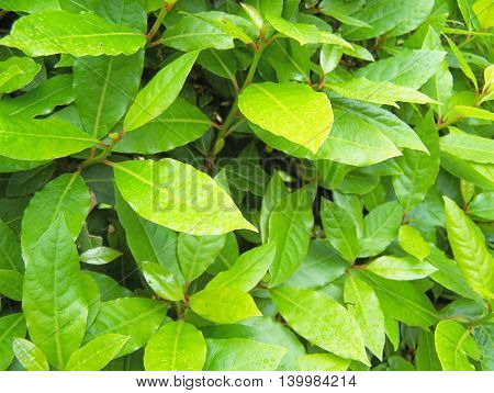 Several beautiful leaves in a public garden