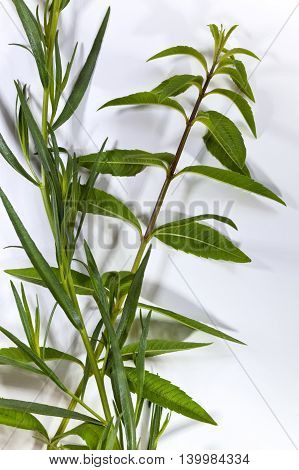 Lemon Verbena And Tarragon