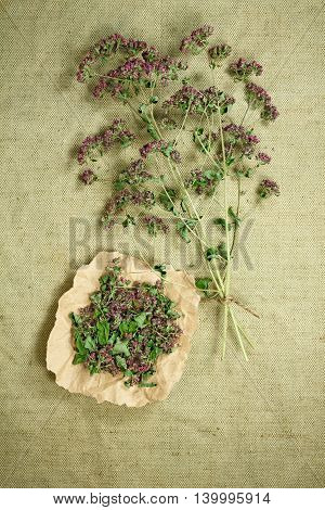 Oregano.Dried herbs for use in alternative medicine.Herbal medicine phytotherapy medicinal herbs.For preparation of infusions decoctions tinctures powders ointments tea.Background green cloth