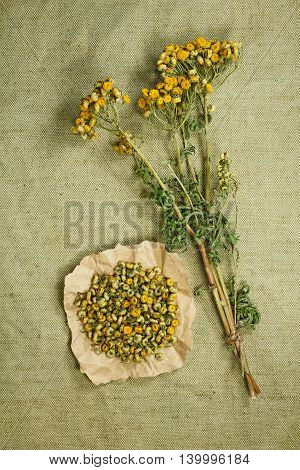 Tansy.Dried herbs for use in alternative medicine.Herbal medicine phytotherapy medicinal herbs.For preparation of infusions decoctions tinctures powders ointments tea.Background green cloth