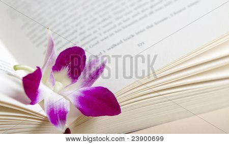 Pink Purple Orchid Flower Resting In A Book