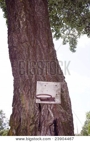 Primitive Basketball Backboard