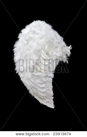 White angel wing