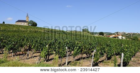 French Vineyads