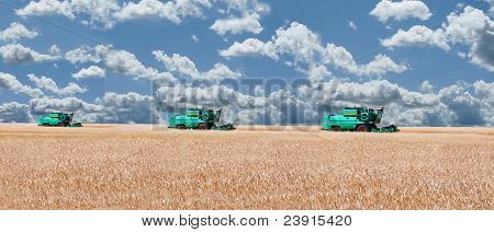 Three Combine Threshing Grain In A Wheat Field