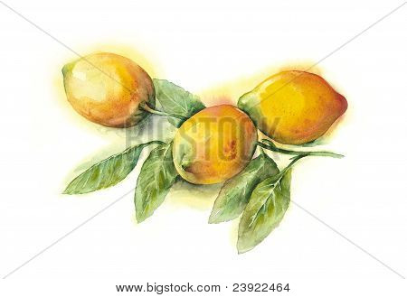 Watercolor -Lemons-
