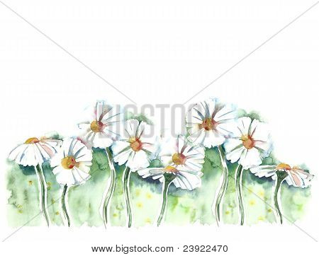 Watercolor -Daisies-