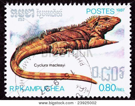 Canceled Cambodian Postage Stamp Lesser Caymans Iguana Cyclura Nubila Caymanensis
