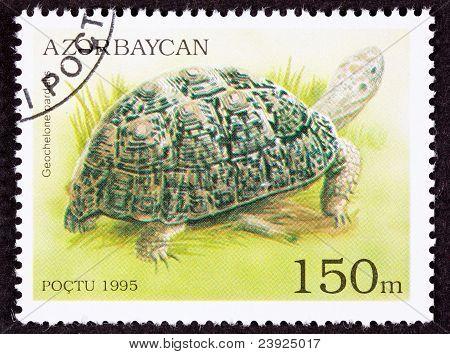 Canceled Azerbaijan Postage Stamp Leopard Tortoise Geochelone Pardalis Marsh