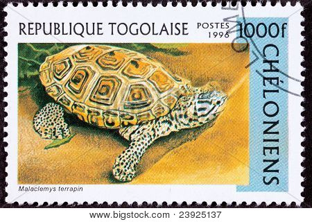 Canceled Togan Postage Stamp Spotted Diamondback Terrapin, Malaclemys Sand