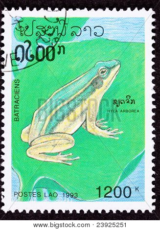 Canceled Laotian Postage Stamp Sitting European Tree Frog Hyla Arborea