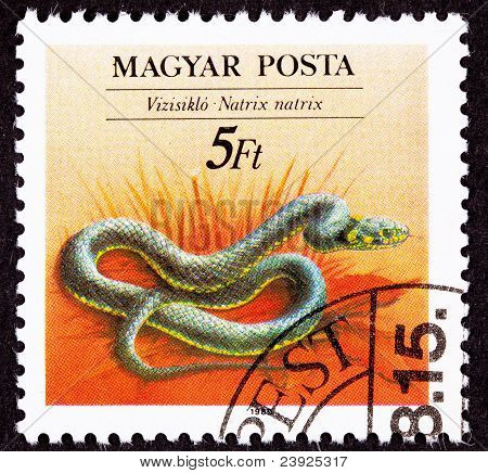 Canceled Hungarian Postage Stamp Grass Snake Natrix Natrix- Ringed, Water