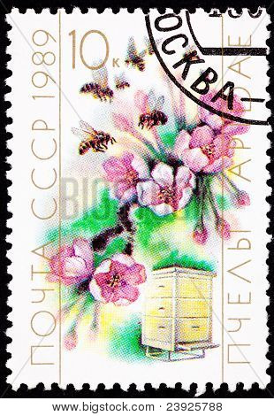 Canceled Soviet Postage Stamp Cherry Blossom Bee Hive Cultivation, Pollination