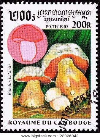 Canceled Cambodian Postage Stamp Satan's Mushroom Boletus Satanas Devil's Bolete
