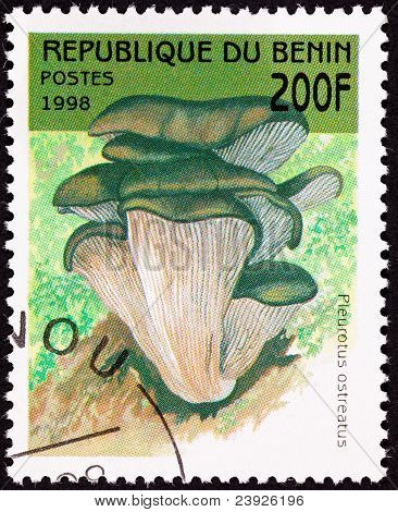 Canceled Benin Postage Stamp Oyster Mushroom, Pleurotus Ostreatus Tree Fungus