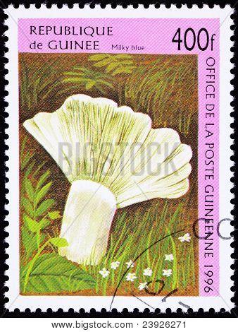 Canceled Guinea Postage Stamp Milky Blue Mushroom Lactarius Indigo