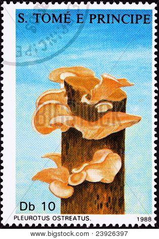 São Tomé Postage Stamp Oyster Mushroom, Pleurotus Ostreatus Tree Fungus