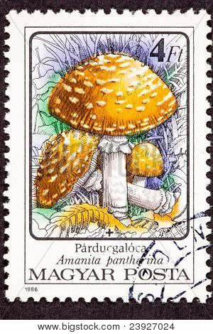 Post Stempel Amanita Pantherina Panther Cap Mushroom