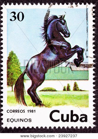 Canceled Cuban Postage Stamp Black Horse Rearing Up In Field