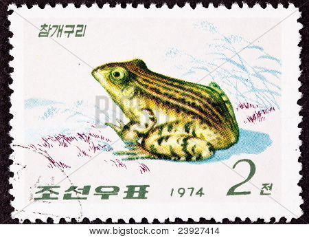 Canceled North Korean Postage Stamp Black Spotted Frog Pelophylax Nigromaculatus