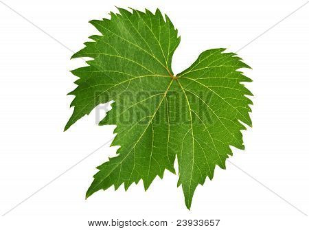 Folha de uva
