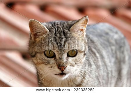 poster of Big Eyed Cat, Cute Cats, Funny-looking Cat, Cute Cat, Funny Cat Pictures,