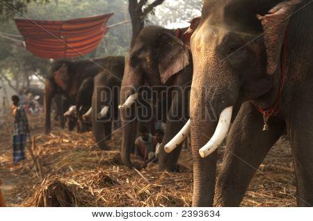 Elephant Bazaar
