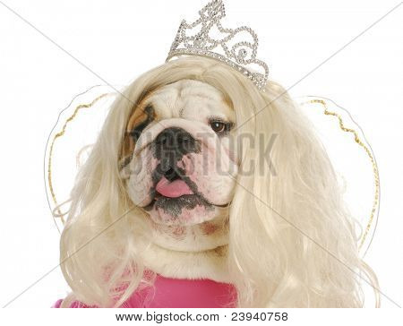 ugly princess - english bulldog wearing wig and princess costume on white background