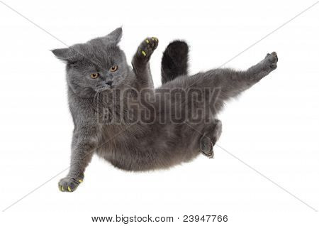 British cat dancing breakdance