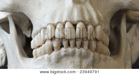 A Close Up Of A Human Skull Jaw And Teeth