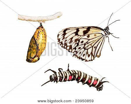 Metamorphosis Life Cycle