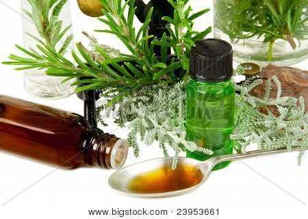 Herbs (rosemary And Santolina) For Medicine