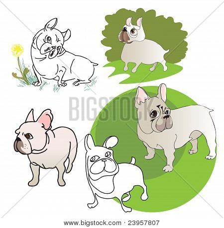 Five Drawings Of  French Bulldog