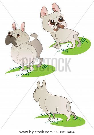 Three Drawings Of  French Bulldog