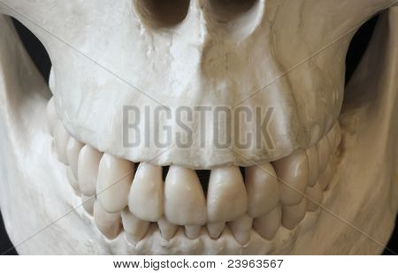 A Close Up Of The Grin Of A Human Skull