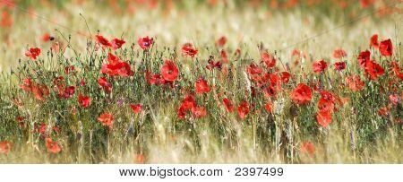 Poppies und Weizen