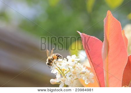 Bee next to red leaves