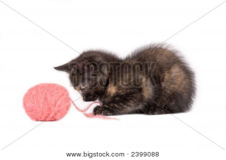 Spotty Kitten Playing With A Ball Of Yarn