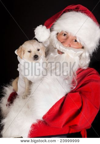 Santa claus bringing a 6 weeks old puppy golden retriever dog