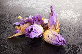 Nymphaea Caerulea Flower On Black Table. Blue Lotus, Sacred Psychoactive Plant. poster