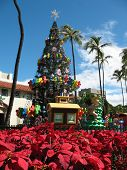 Outdoor Hawaii Christmas Tree With Red  Poinsettia Bush poster