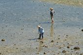 picture of clam digging  - Two local fisherman dig for clams at low tide in Okinawa - JPG