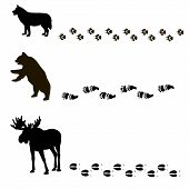 pic of bear tracks  - vector painting of animals and their tracks - JPG
