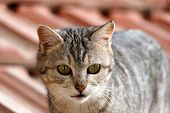 Big Eyed Cat, Cute Cats, Funny-looking Cat, Cute Cat, Funny Cat Pictures, poster