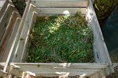 Compost Bin Of Wood Filled With Weeds From The Garden poster