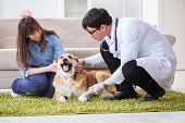 Vet doctor visiting golden retriever dog at home poster