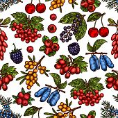 Berries And Berry Fruits Sketch Pattern Background Of Fresh Forest Or Garden Berry Harvest. Vector S poster