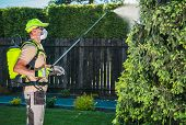 Garden Insecticide By Spraying. Caucasian Worker In His 30s Spraying Garden Trees Using Professional poster