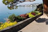 image of montre  - Flower Alley in Montreux - JPG
