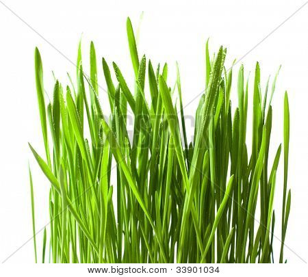 Isolated green grass  with drops on white background